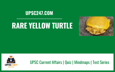 Rare Yellow Turtle UPSC   Species In news